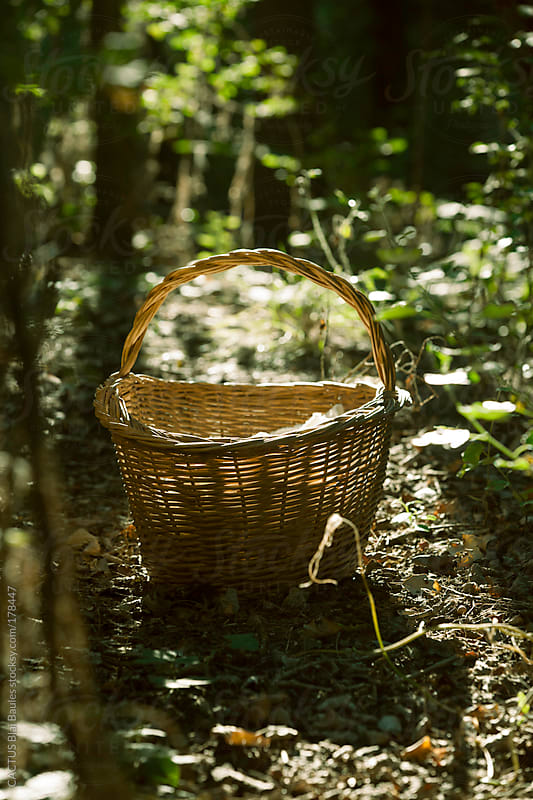 Wicker basket in the forest by CACTUS Blai Baules for Stocksy United