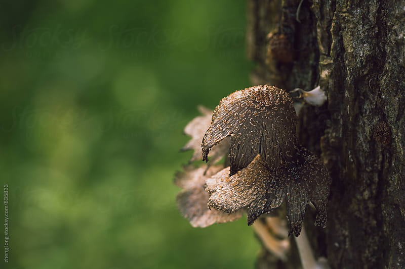 Wild mushroom by zheng long for Stocksy United