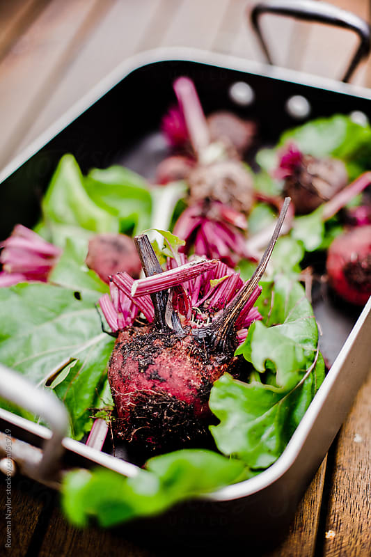 Organic Beetroot by Rowena Naylor for Stocksy United