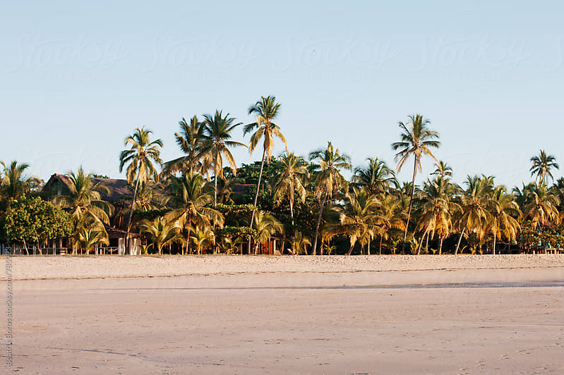 Palm trees on a sandy beach with palms by Beatrix Boros for Stocksy United