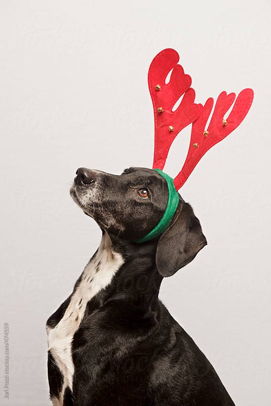 Merry Christmas dog by Juri Pozzi for Stocksy United