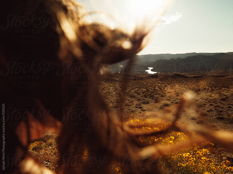Desert landscape through hair blowing in the window by Joseph West Photography for Stocksy United