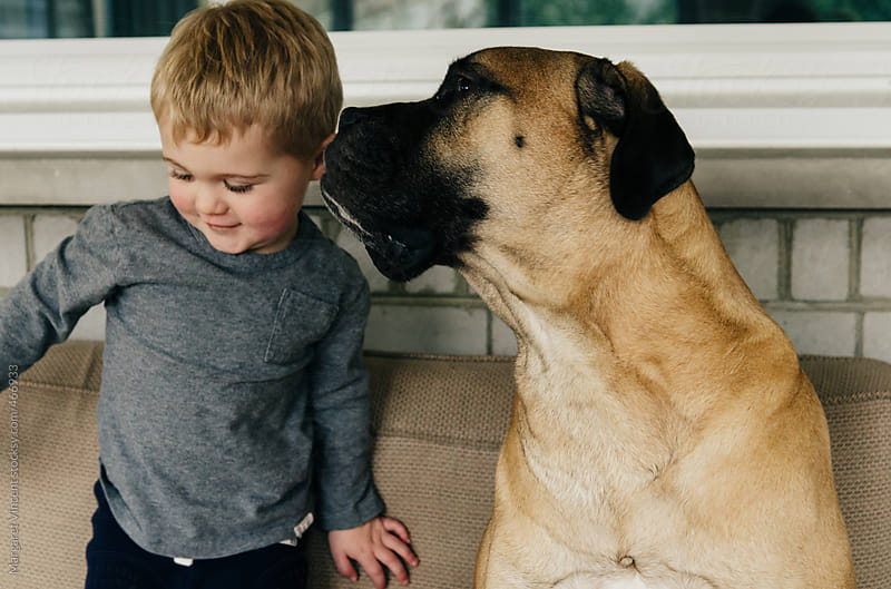 a boy and his very large dog by Margaret Vincent for Stocksy United