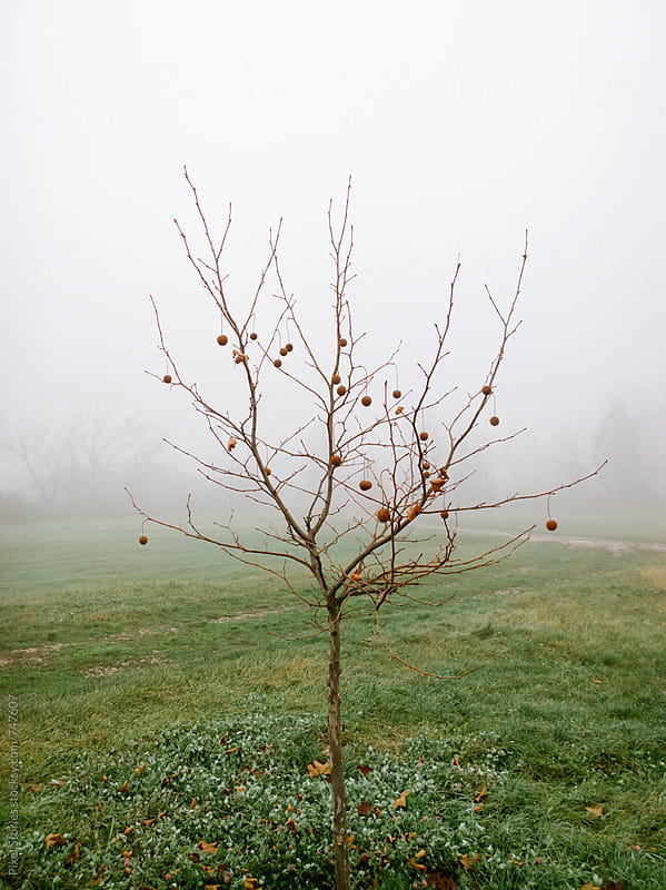 Single bare tree in the morning fog by Pixel Stories for Stocksy United