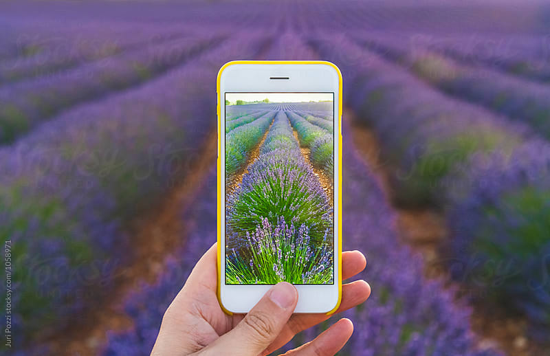 Man taking a picture of a lavender fields by Juri Pozzi for Stocksy United