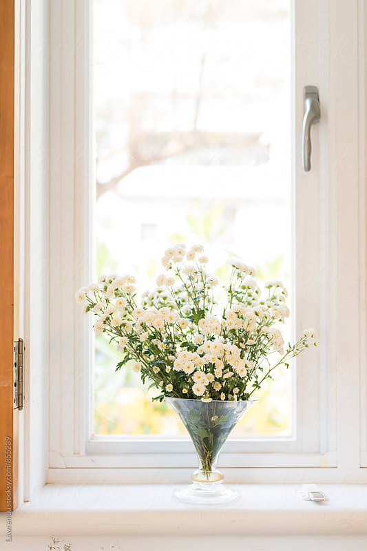Vase with a Bouquet of White Daisies on windowsill by Lawren Lu for Stocksy United