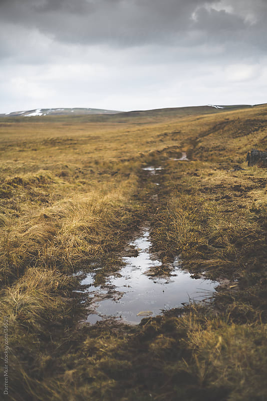 Scottish moorland  by Darren Muir for Stocksy United