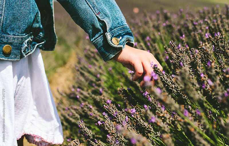 Girl in a field of lavender by Helen Rushbrook for Stocksy United