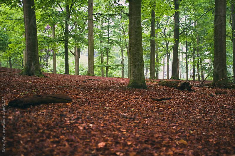 Wet woods by Robert-Paul Jansen for Stocksy United