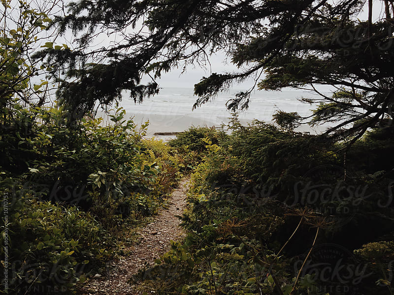 Hiking Trail Leading to the Pacific Ocean in Washington by michelle edmonds for Stocksy United