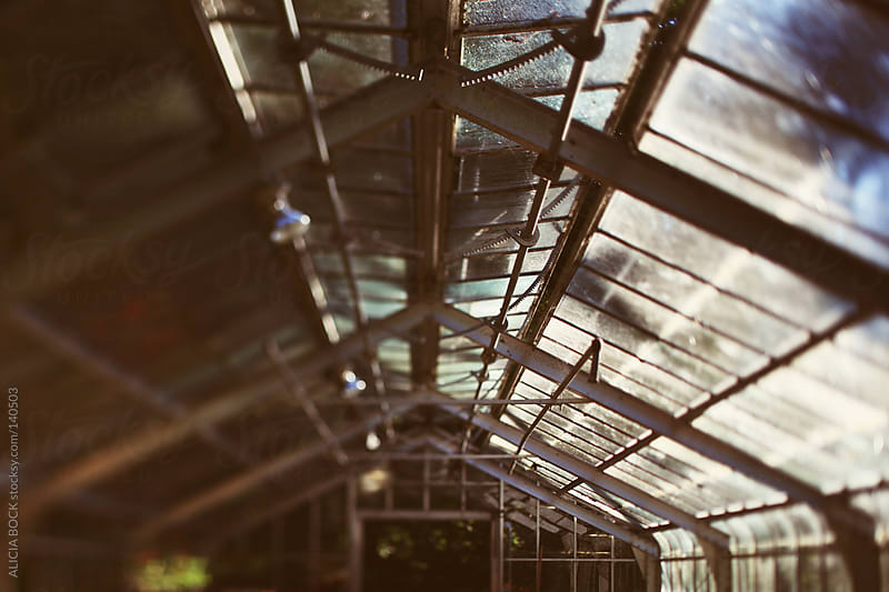 Greenhouse Ceiling by ALICIA BOCK for Stocksy United