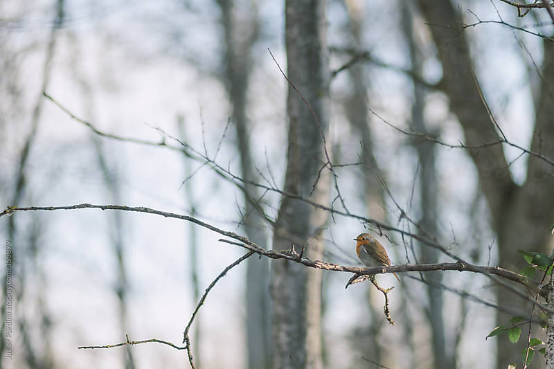 small bird on a branch by Javier Pardina for Stocksy United