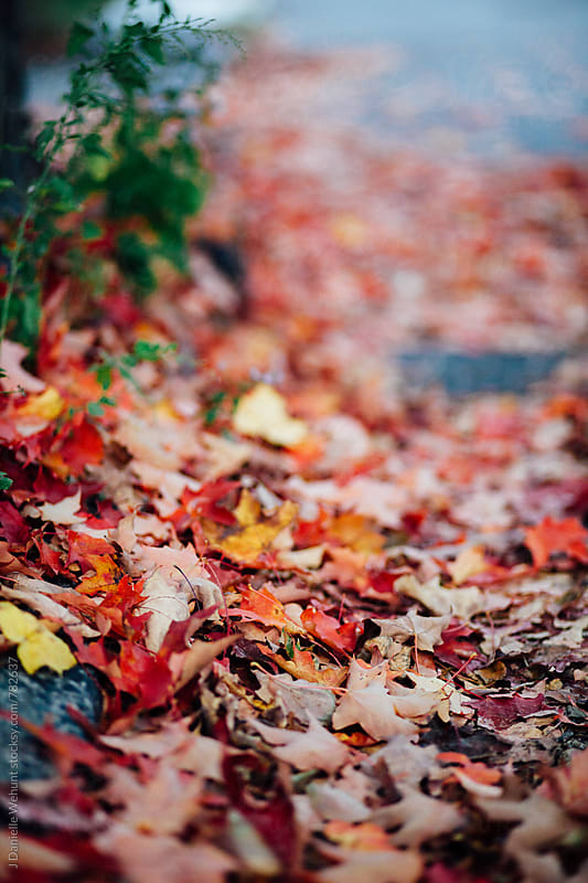 Vibrant red, orange and yellow fall and autumn leaves on the ground by J Danielle Wehunt for Stocksy United