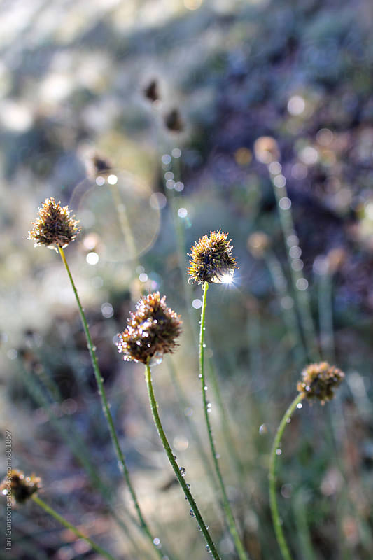 Sparkly dew on meadow flowers by Tari Gunstone for Stocksy United