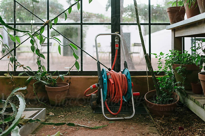 Interior of greenhouse with red watering hose by Trent Lanz for Stocksy United