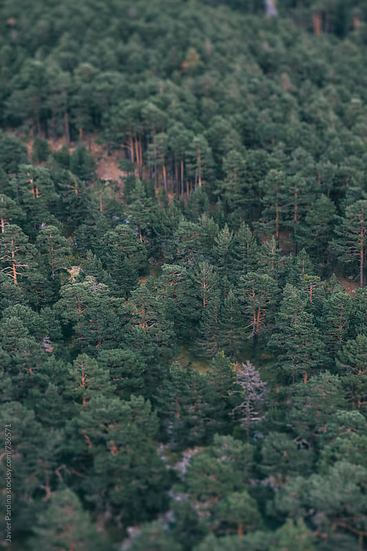 part of forest in mountains by Javier Pardina for Stocksy United