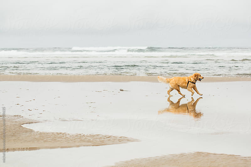 A dog plays with the ball on the beach by michela ravasio for Stocksy United