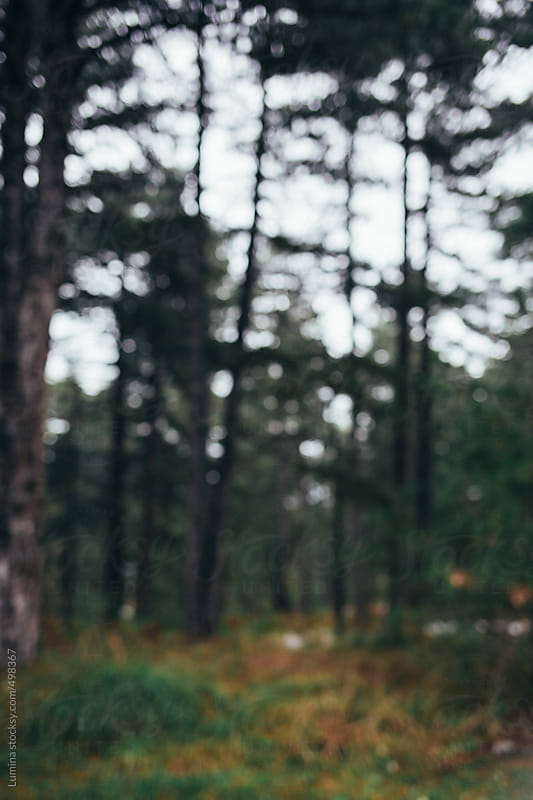 Defocused Shot of a Forest by Lumina for Stocksy United