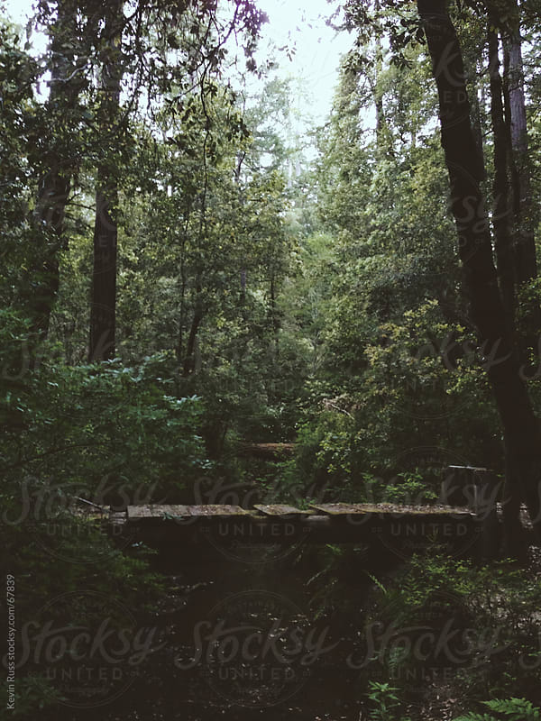 Moody Forest Footbridge by Kevin Russ for Stocksy United