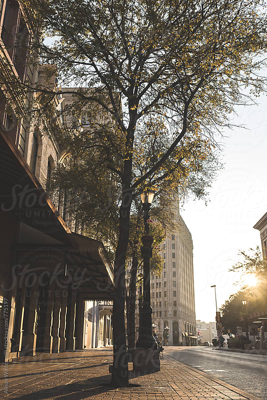 City Trees At Sunrise by Alison Winterroth for Stocksy United