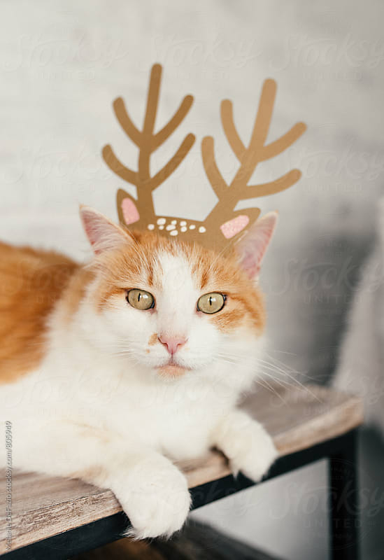 Holiday kitty by Melanie DeFazio for Stocksy United