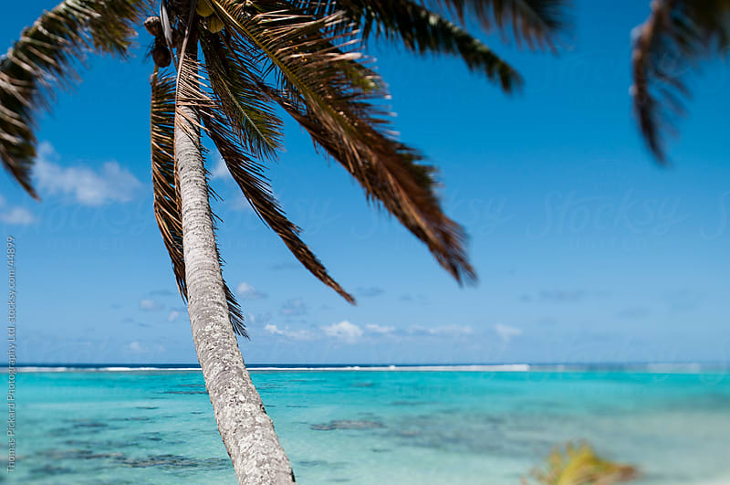 Palm tree and lagoon, Rarotonga Island, Cook Islands. by Thomas Pickard for Stocksy United