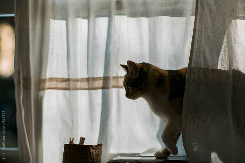 Side view of cat on windowsill in sunset light by Laura Stolfi for Stocksy United