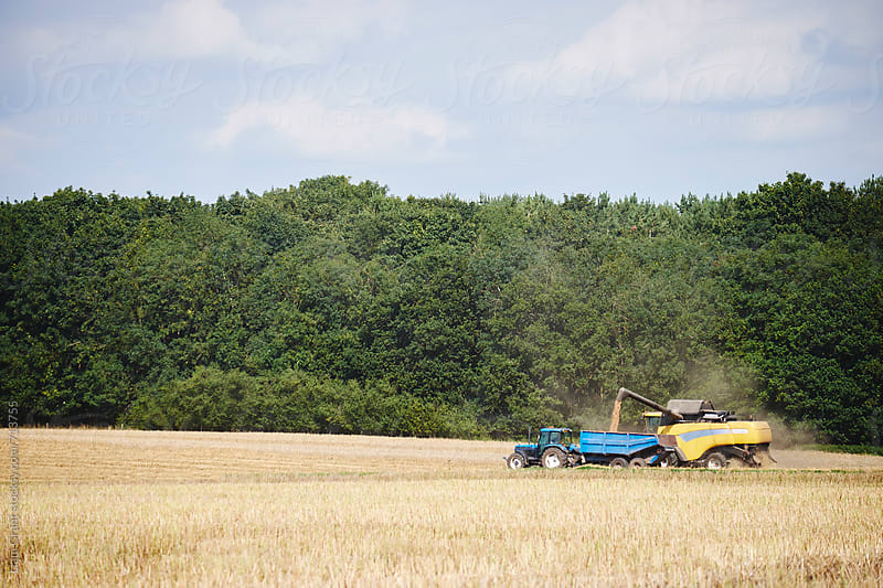 Tractor collecting grain from a combine harvester. Norfolk, UK. by Liam Grant for Stocksy United