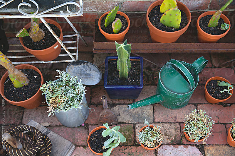 small outdoor garden pot plants with cactus and succulents by Natalie JEFFCOTT for Stocksy United