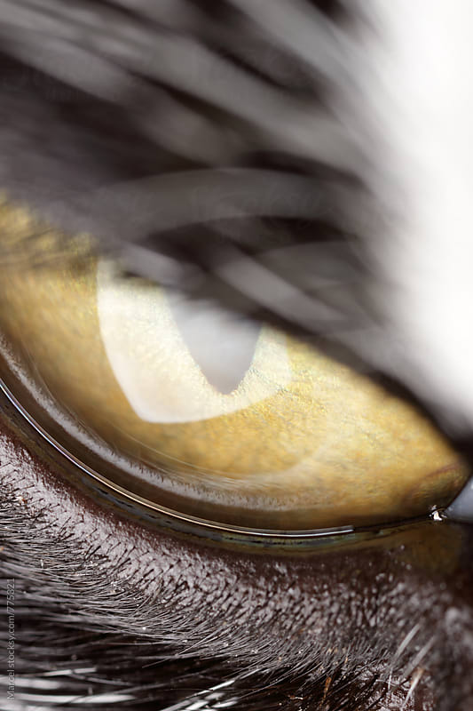 Scary staring eye of a cat by Marcel for Stocksy United