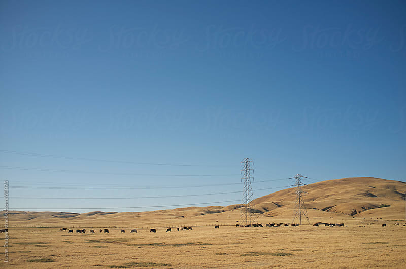 Power Lines and Cows by Lucas Saugen for Stocksy United