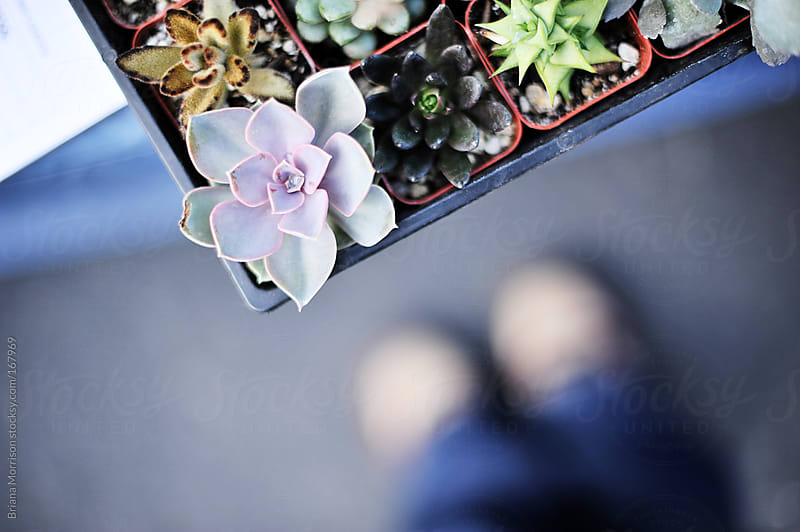 Succulents at a Market and Feet by Briana Morrison for Stocksy United
