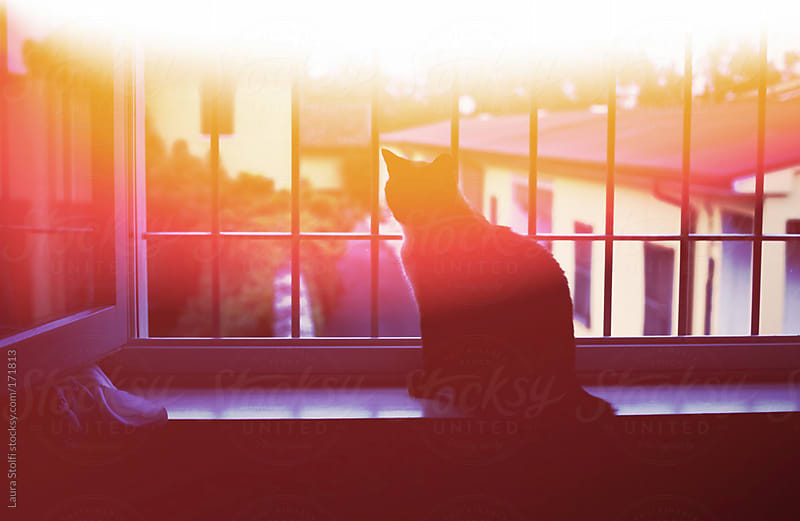 Silhouette of cat on windowsill in sunset light by Laura Stolfi for Stocksy United