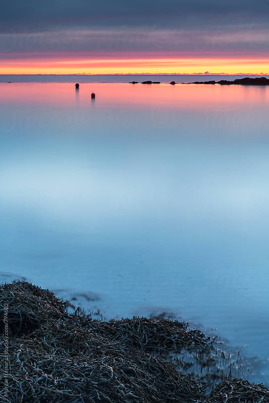 View of a coast with seaweed with midnight sun by Marilar Irastorza for Stocksy United