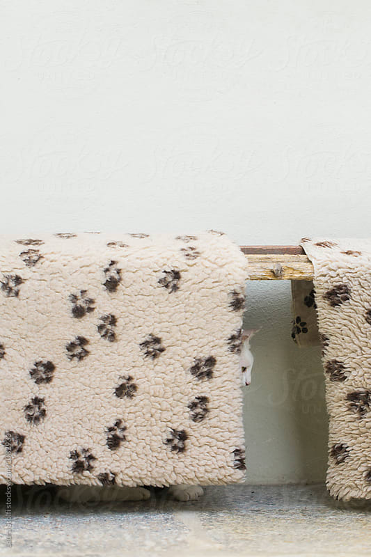 Cat sits behind pets bedding  by Laura Stolfi for Stocksy United