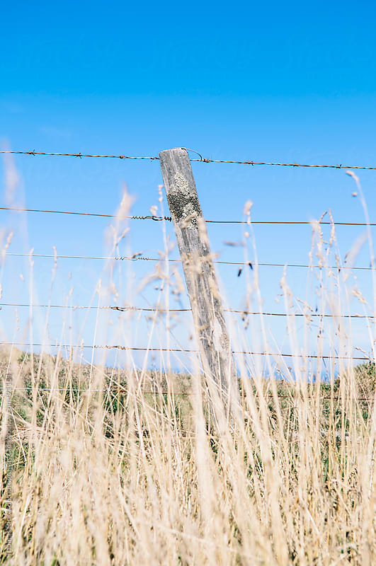 Tall grass and fence post, Banks Peninsula, New Zealand. by Thomas Pickard Photography Ltd. for Stocksy United