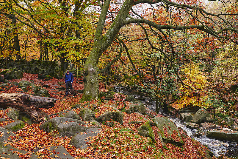 Male walking his dog in autumnal woodland. Padley Gorge, Derbyshire, UK. by Liam Grant for Stocksy United