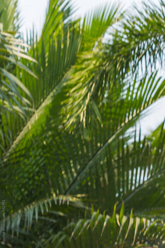 Palm Tree Leaves as a Background by Mosuno for Stocksy United