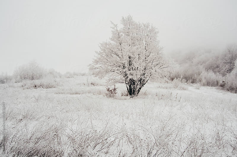 Meadow with snow in winter by Cosma Andrei for Stocksy United