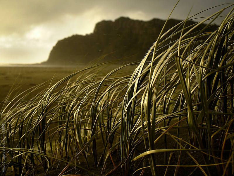 Tussock in squally weather by Amos Chapple for Stocksy United