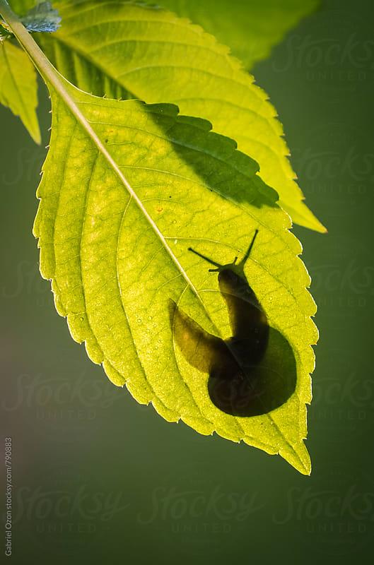 Slug by Gabriel Ozon for Stocksy United