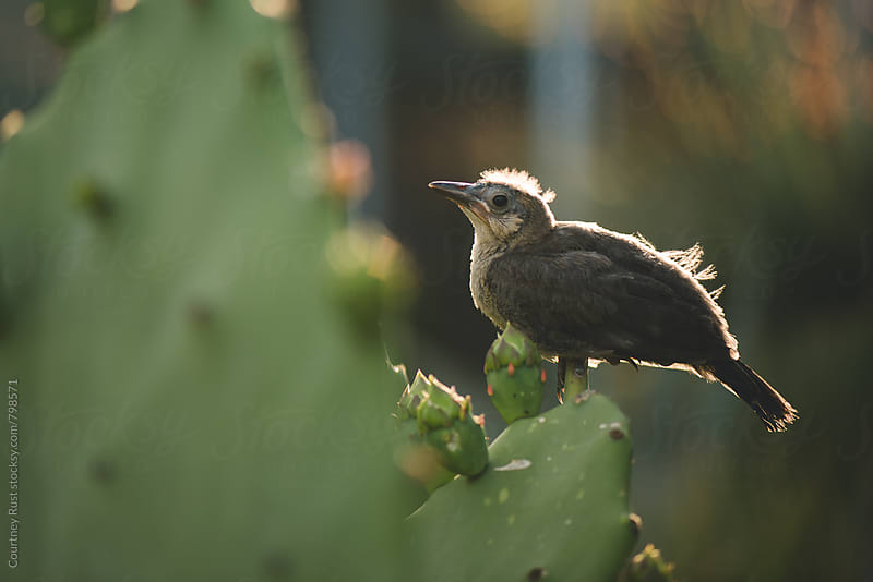 Bird on a cactus by Courtney Rust for Stocksy United