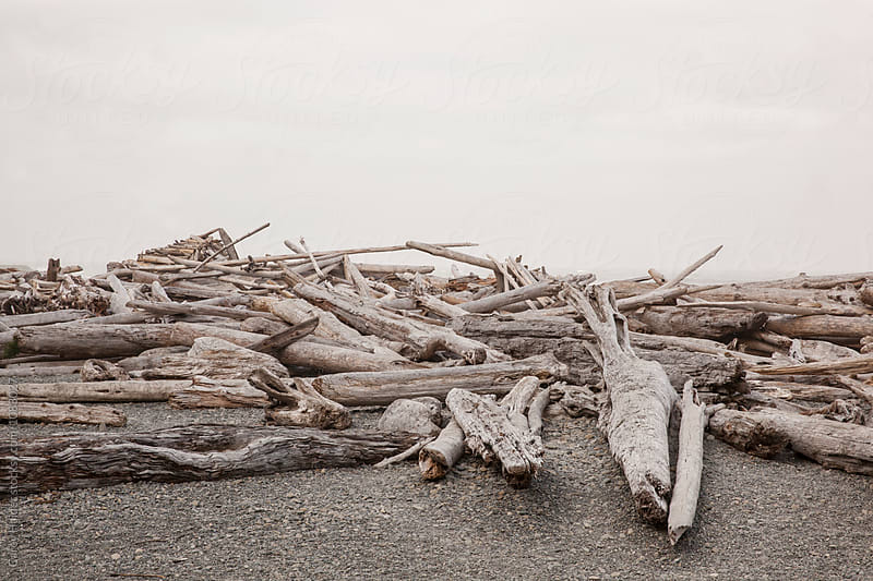 Drift Wood On A Beach by Carey Haider for Stocksy United