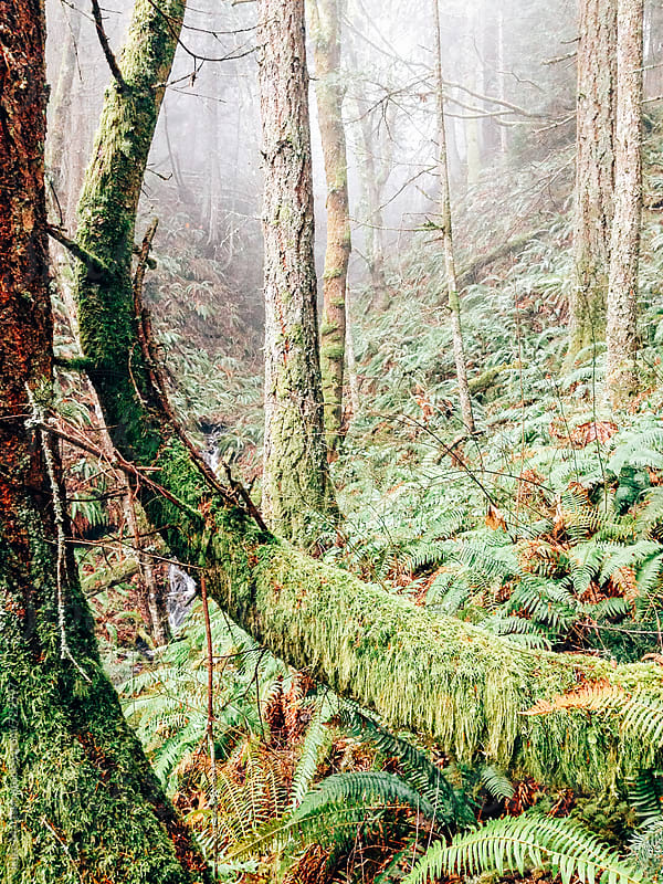 Curved Forest Tree Covered In Green Moss by Luke Mattson for Stocksy United