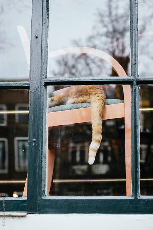 Cat relaxing on a chair in Amsterdam by Simone Becchetti for Stocksy United
