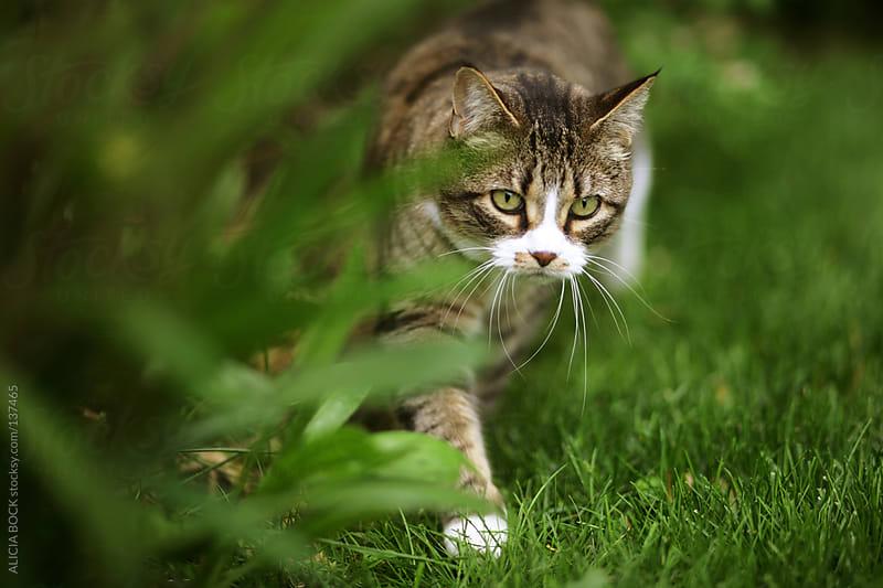 Cat In The Garden by ALICIA BOCK for Stocksy United
