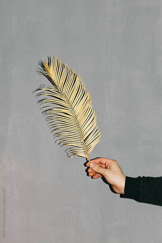 Male hand holding a palm leaf  by Marija Kovac for Stocksy United
