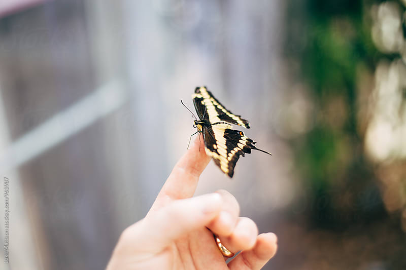 Black And Yellow Patterned Butterfly Resting On Tip Of Man's Finger by Luke Mattson for Stocksy United