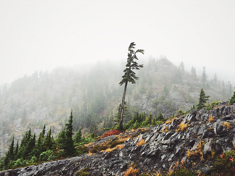 Solitary Tree Standing On Rocky Forest Mountainside In Fog by Luke Mattson for Stocksy United
