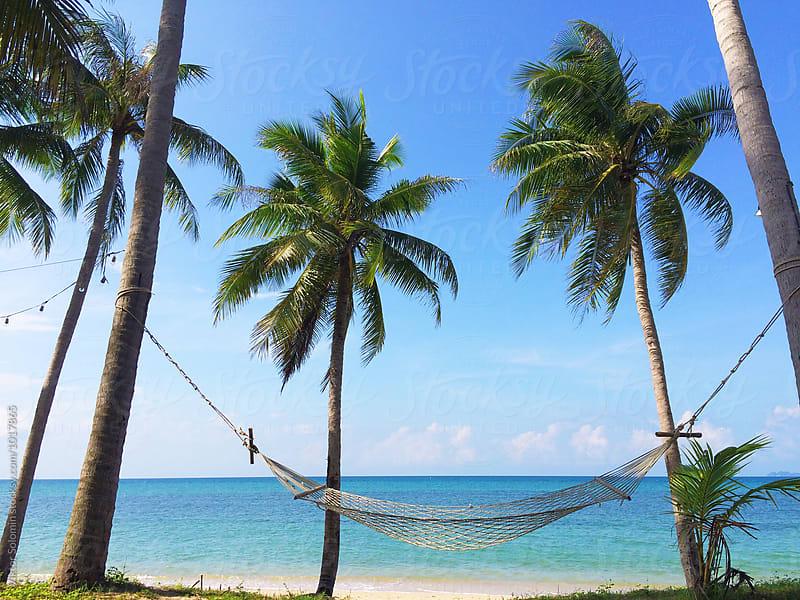 Hammock between palms on tropic island by Viktor Solomin for Stocksy United